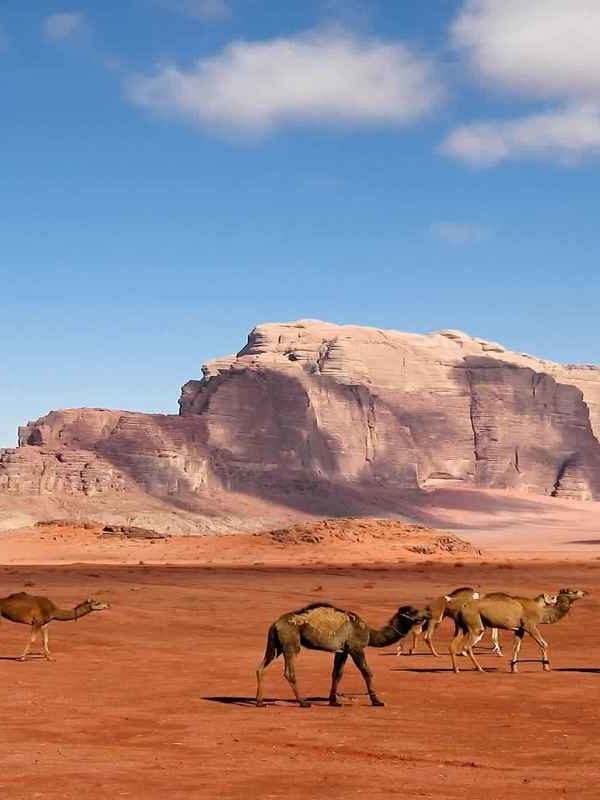 Egypt and Jordan Tours, Jordan tours , Egypt Jordan tours , Egypt travel packages