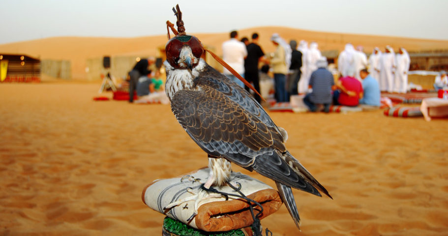 Dubai Falcon desert trip